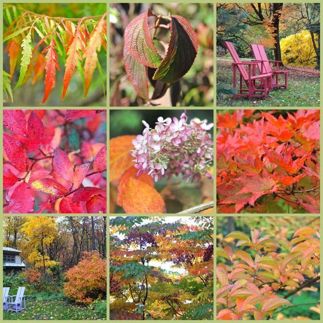 12 Bome en struike vir `n goeie herfstkleur