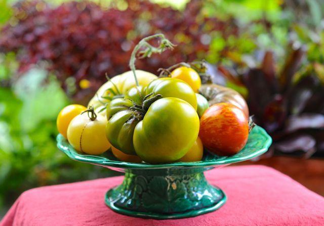 Tomato-groeiende faq`s